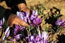 اجرای طرح بسیج همگام با کشاورز در ۸۷۲ روستای کهگیلویه و بویراحمد
