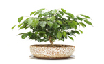 10 گیاه تصفیه کننده هوا برای اتاق خواب به پیشنهاد ناسا! + تصاویر