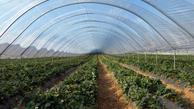 ایجاد شهرک گلخانه ای در 520 هکتار از اراضی آذربایجان غربی