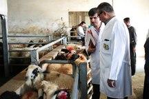 نظارت 47 گروه دامپزشکی کردستان بر دام های قربانی در روزهای تاسوعا و عاشورا