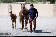 صنعت اسب به زبان ساده