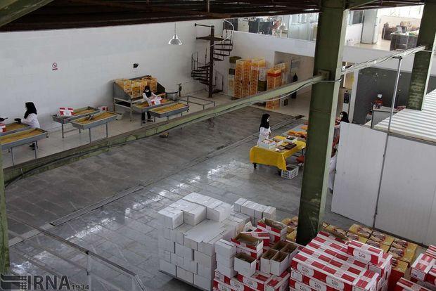 بیش از یک هزار مددجوی کمیته امداد همدان وارد بازار کار شدند