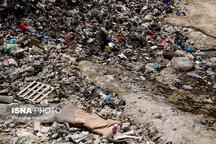 روزانه 510 تن پسماند خانگی در ارومیه تولید می شود