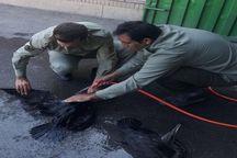 نجات ۲۵ باکلان در نمکزارهای دریاچه ارومیه