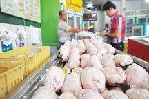 توزیع  مرغ منجمد  در بازار بروجرد  آغاز  شد