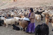 تنش آبی زندگی را بر عشایر استان کرمان دشوار کرده است