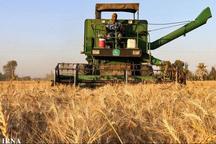 برداشت گندم از مزارع شهرستان امیدیه به پایان رسید