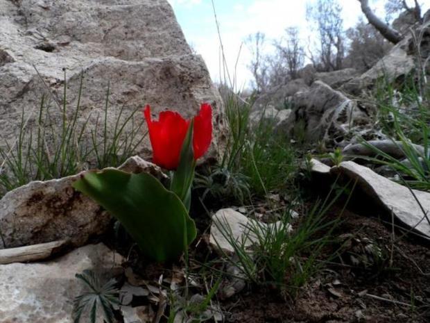 بهار کردها جشنی ریشه دار اما فراموش شده