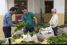 بیش از 70 هزار تن برگ سبز چای خریداری شد
