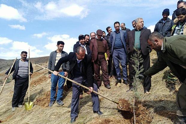 400 اصله نهال در منطقه گردشگری چشمهاعلا دماوند غرس شد