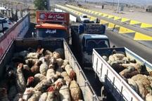 قاچاق دام از مرزهای آذربایجان شرقی ممکن نیست