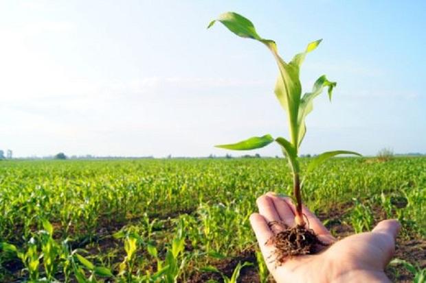 حرکت جهادی برای توسعه کشاورزی