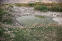 برخی افراد به جای فرافکنی، مشکل آب استان بوشهر را حل کنند