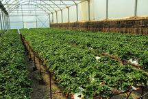 150 هزار هکتار زمین برای احداث شهرک های کشاورزی شناسایی شد