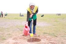 10 هکتار زمین در خوزستان به زیر کشت نهال رفت