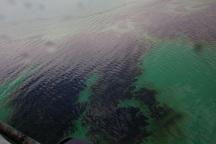 فرماندار هندیجان: منشا لکه نفتی در بحرکان مشخص نیست