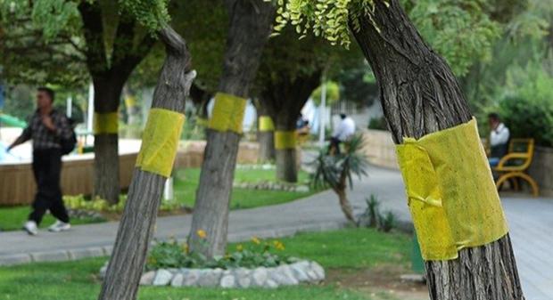 جزییات جلسه شورای شهر تهران در مورد مگس های سفید