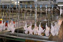 کاهش جوجه ریزی از علل افزایش قیمت مرغ است