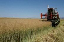 افزون بر 15 هزارهکتار در فسا به کشت پاییزه اختصاص یافت