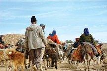 توزیع ماهانه ۸۸۶ تن آرد سفید در مناطق عشایری لرستان