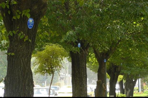 حناچی: برای حفظ باغ های پایتخت به مالکان انگیزه می دهیم