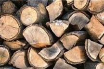 کشف 2 تن چوب قاچاق بلوط در شهرستان لردگان