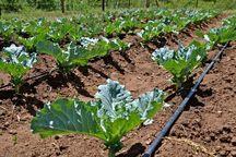 ۸۸ طرح جهاد کشاورزی استان مرکزی در هفته دولت  آماده بهره برداری است