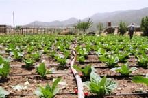 آبیاری موضعی و کشت نشایی حلقه گمشده کشاورزی - عبدالله رحمانی*