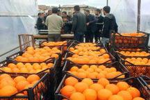 میوه شب عید در 50 نقطه شیراز عرضه می شود