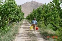 مدیر جهاد کشاورزی: کمبود آب در ابرکوه جدی است بهره برداران چالش را باور کنند