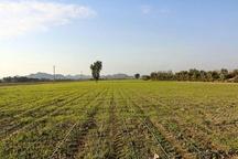 اجرای پروژه ایکاردا منجر به توسعه کردستان می شود