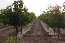 31 درصد جمعیت خراسان جنوبی در بخش کشاورزی فعال هستند
