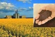 کشاورزان مازندرانی 860 میلیارد ریال کلزا فروختند