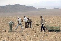 عملیات بیابان زدایی 1097 هکتار اراضی بوشهر اجرا شد