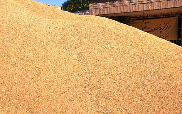 مشکل کمبود گندم در بازار استان تهران وجود ندارد