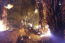 نابودی 630 نخل خرما در آتش سوزی جالق سراوان