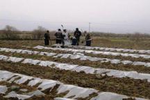 اختصاص حدود 15 هزار هکتار زمین در شمال سیستان و بلوچستان به کشت جالیز