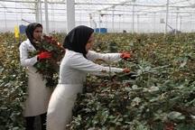 387 میلیارد ریال تسهیلات اشتغال روستایی در مهاباد پرداخت شد