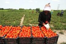 زنجیره تولید در تعاونی های روستایی سمنان تکمیل نیست