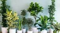 فواید شگفت انگیز نگهداری گل در خانه