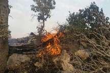 پارسال 25 فقره آتش سوزی در مراتع و جنگل های گیلانغرب رخ داد