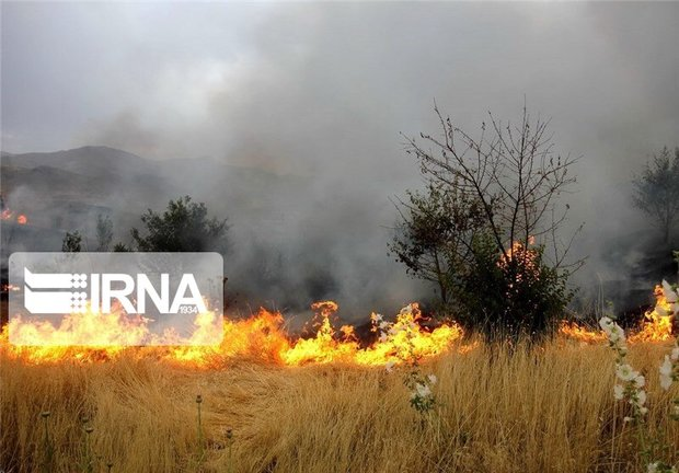 آتشزننده منابع طبیعی داراب به زندان افتاد