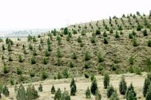 امسال 20 هزار هکتار از اراضی کشور جنگل کاری شد