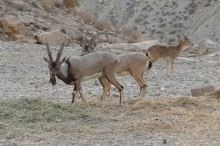 محیط زیست طرح گردشگری در منطقه حفاظت شده خائیز را مجاز کرد