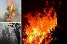 ۱۳۰ هکتار از جنگل های مریوان طعمه حریق شد