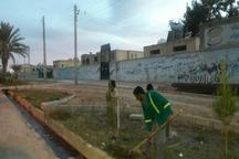 شهردار: هزار اصله کاج در بلوارها و میادین شهر خاش غرس شد