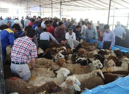مسئول استانی: مشکلی در تامین دام زنده روز عید قربان در خراسان شمالی وجود ندارد