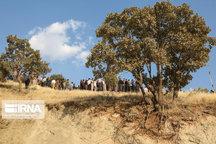 خرید  بذر گونههای جنگلی از بهرهبرداران کهگیلویه و بویراحمد آغاز شد