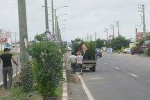 بیش از 200 اصله درخت در بلوار اصلی ورامین کاشته شد