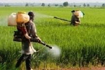 400 هکتار از مزارع نمین علیه موش صحرایی سمپاشی شد
